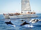 Voyage Super Catamaran Cote et Dauphins